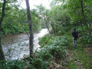 ウヨロ川:サケの遡上が観察できる