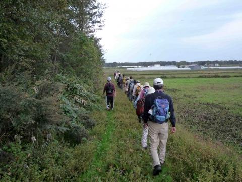 南幌フットパス・月例ウォーク:あぜ道を歩く