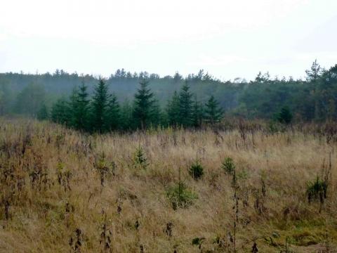 厚床パス:国有林内にある苗畑跡