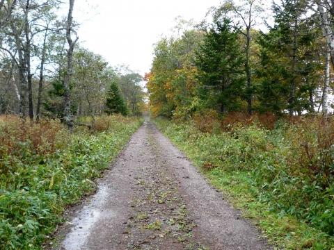 厚床パス:天然林を通り抜ける道