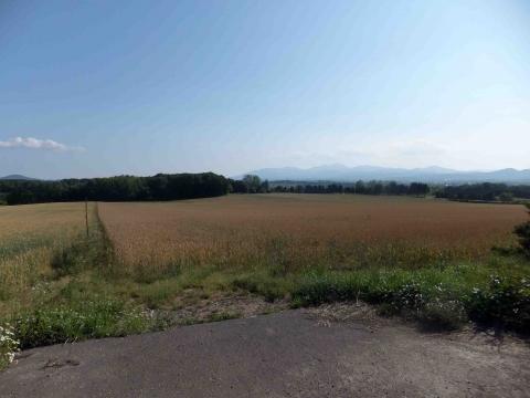 山の辺コース:菜の花畑跡