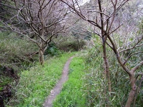 御所谷入口からウルシ林へ