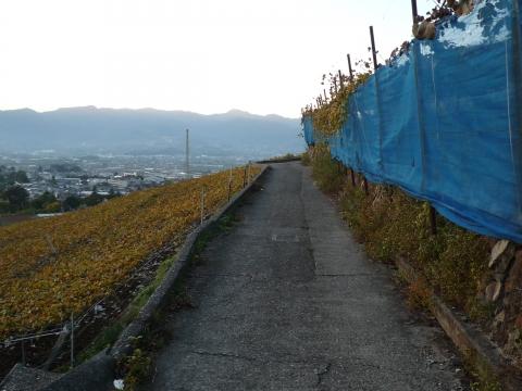 深沢コース:ぶどう畑沿いの道