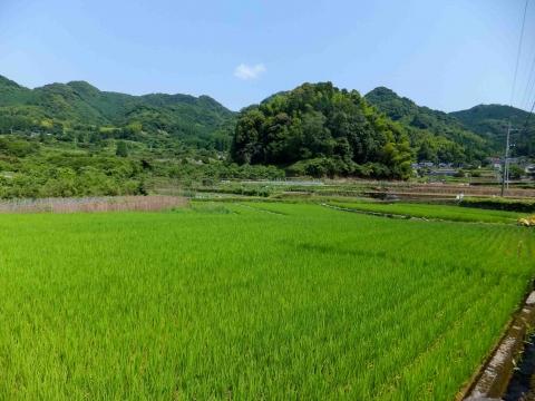 網津コース:のどかな田園風景