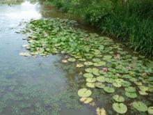 「百合が原から東茨戸」コース:篠路新川の河川緑地内