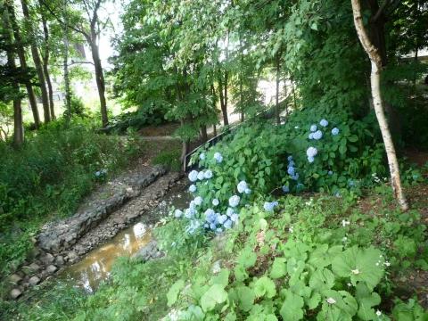 「百合が原から東茨戸」コース:篠路拓北川付近の道