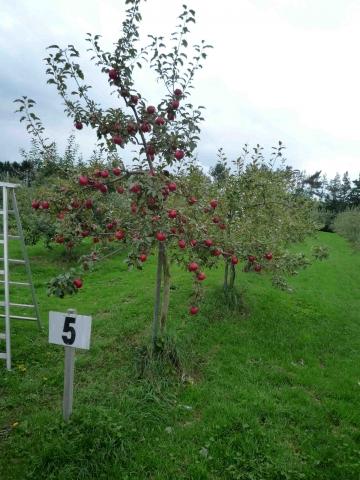 南幌フットパス・月例ウォーク:りんご園